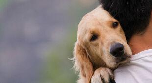 Wyprowadzanie psów obowiązkiem?