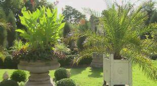 W ogrodzie, gdzie królują pawie i rzeźby (odc. 518)