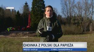 Choinka z Polski dla papieża
