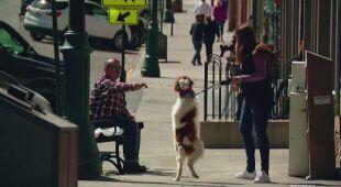 Ten pies chodzi na dwóch łapach